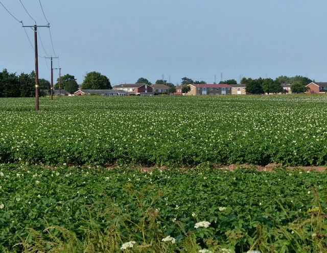 Farmland south of Wyberton
