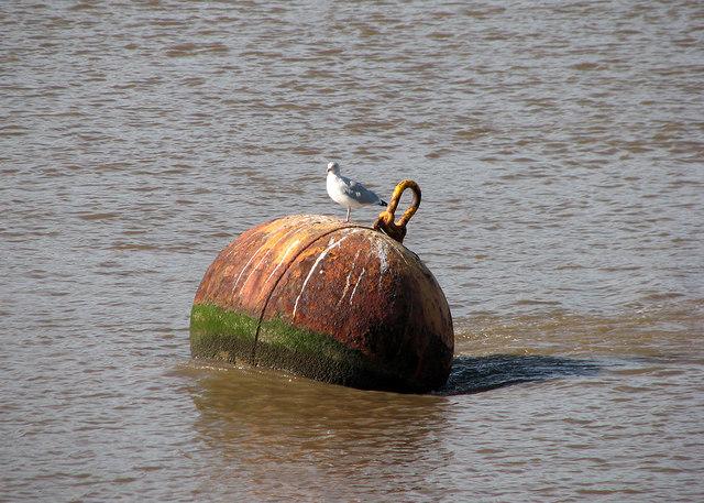 King's Lynn: buoy and gull