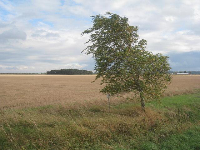 Lone tree by the roadside