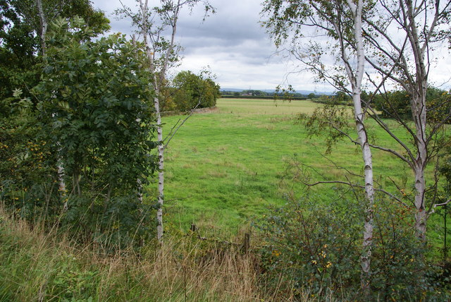 Grassy field by the A556