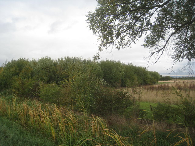 Small plantation