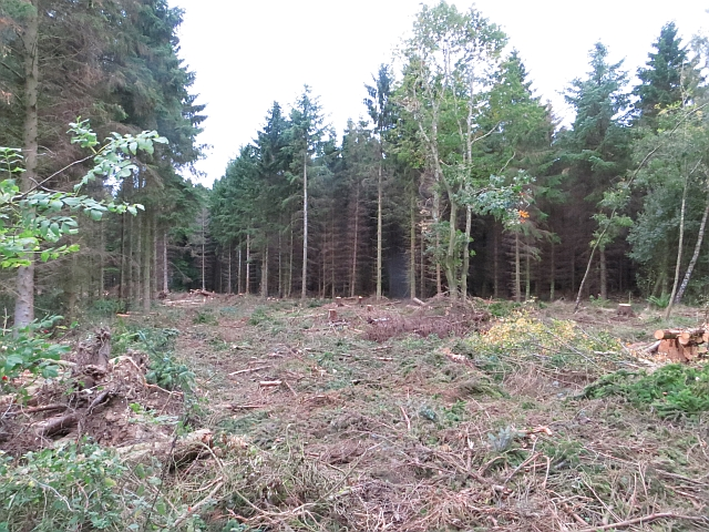 New clearing, Butterdean Woods