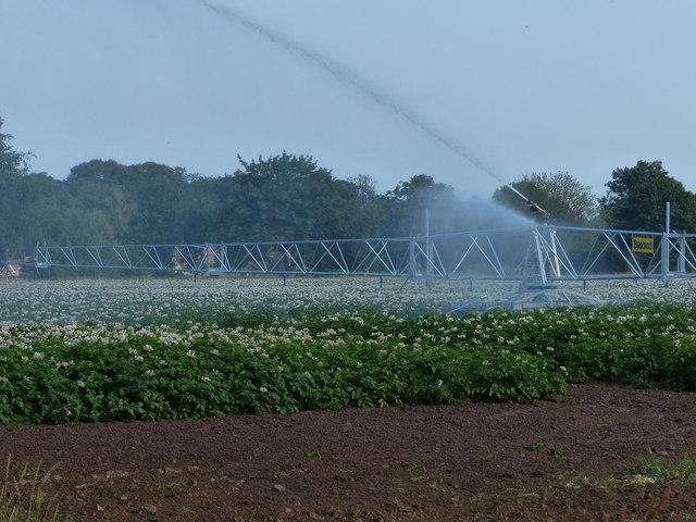 Irrigating the crops near Frampton