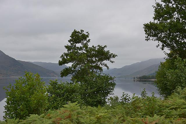 Tree by Loch Arkaig