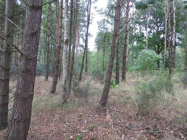 Butterdean Wood