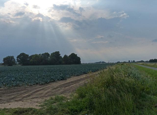 Farmland near the village of Frampton