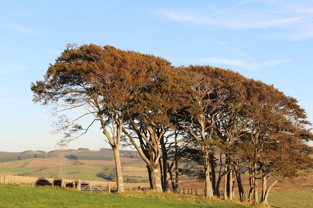 Trees at Guiltreehill