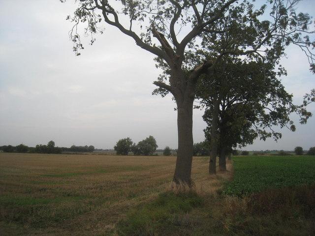 Field boundary near Asselby