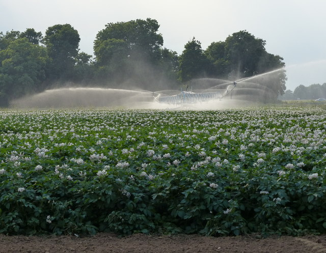 Irrigating a potato field near Frampton
