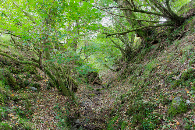 Small gulley in the woodland