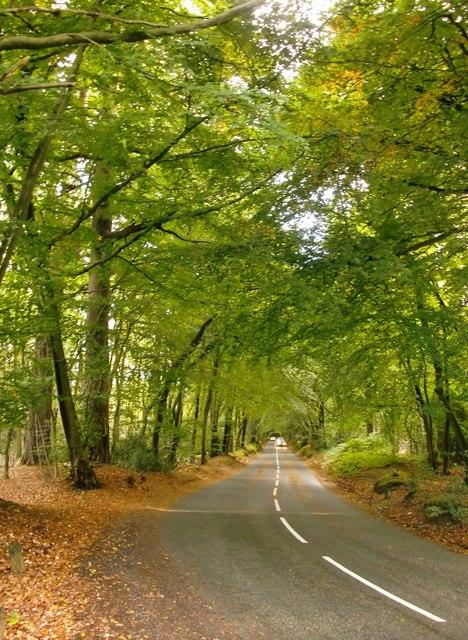 Road through beech woodland