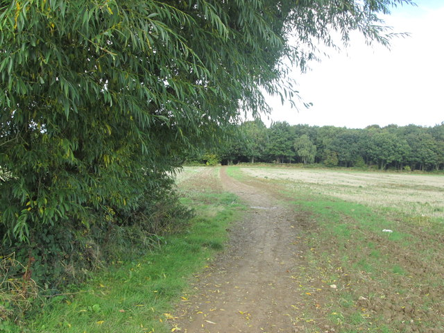 Path towards Notton Wood from Lee Lane