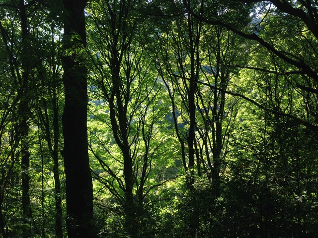 Trees in Cragg Vale
