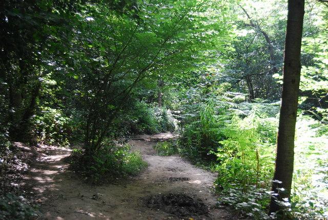 LOOP in Petts Wood