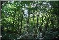 TQ4468 : Petts Wood by N Chadwick
