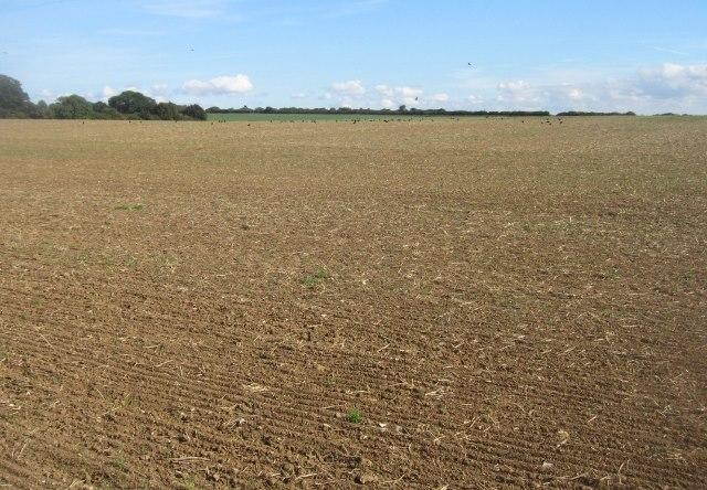 Roundgrove Field (36.5 acres)