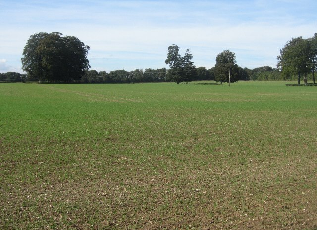 View across South Field (18.5 acres)