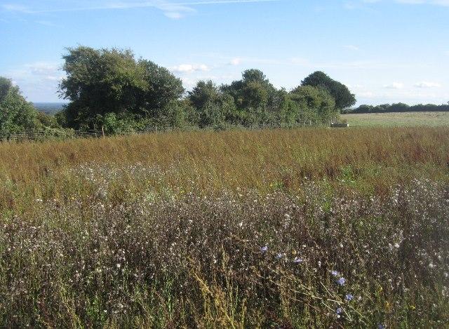 Wildflowers in a field corner