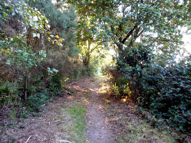Off Dorking Road (B2032):  Bridleway onto Banstead Heath
