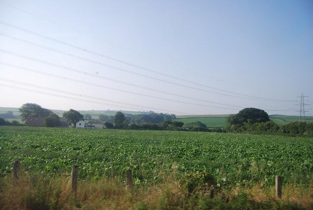 Field of Brassicas