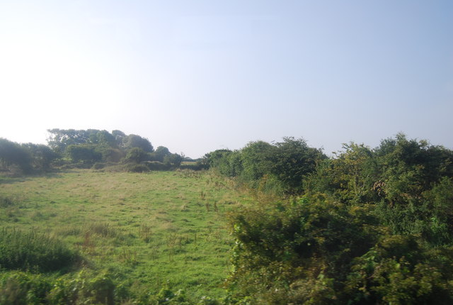 Rough grazing by the railway line
