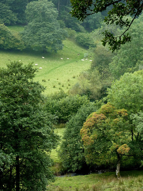 Pasture and woodland by Nant Cnyffiad, Powys