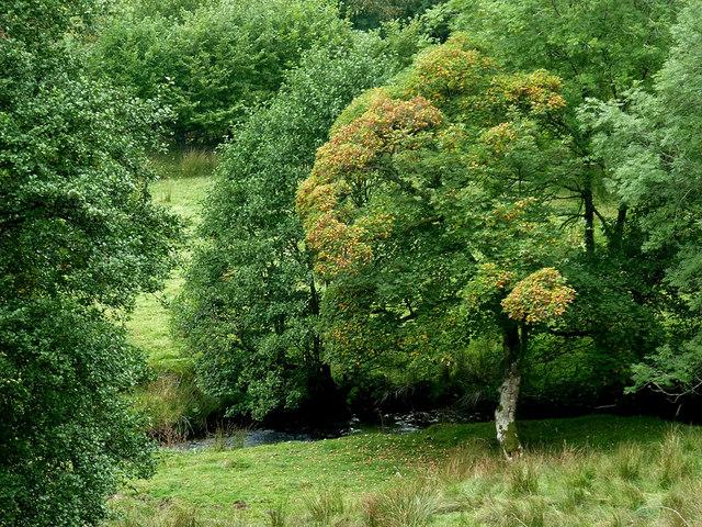 Pasture and woodland by Nant Cnyffiad, Powys