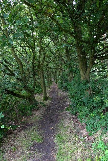 Public footpath through Bunkers Hill Wood, Staffs