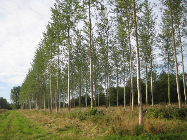 Stoke Hammond: Commercial forestry