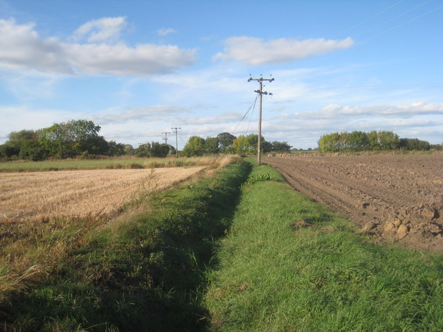 Field boundary near Eastrington