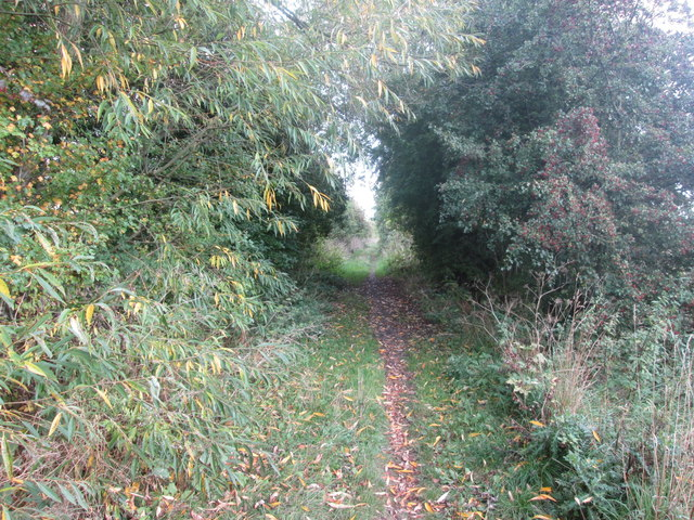 Track going east from Storrs Wood