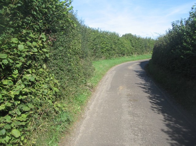 High hedges along Hook Lane