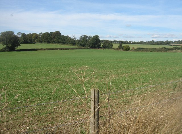 Tangier Bottom Field (15.5 acres)