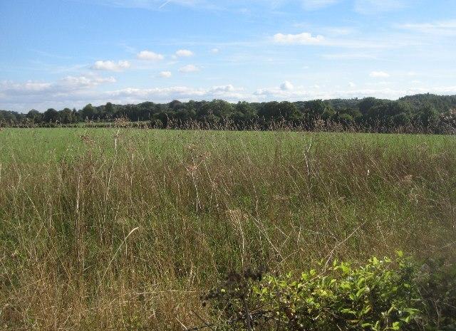Looking into Barn Field
