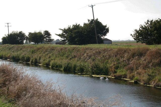 Swans on Hobhole Drain