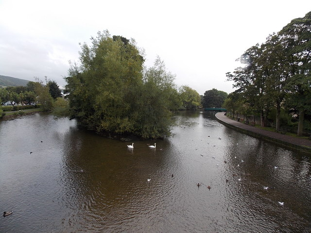 Two swans in the Wye at Bakewell