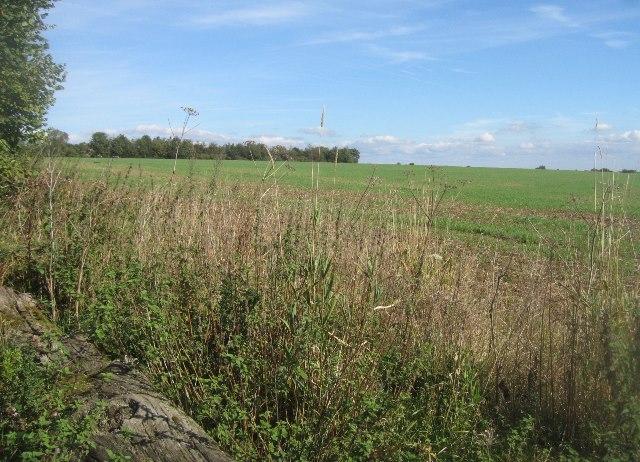 Looking into Big field (78.5 acres)