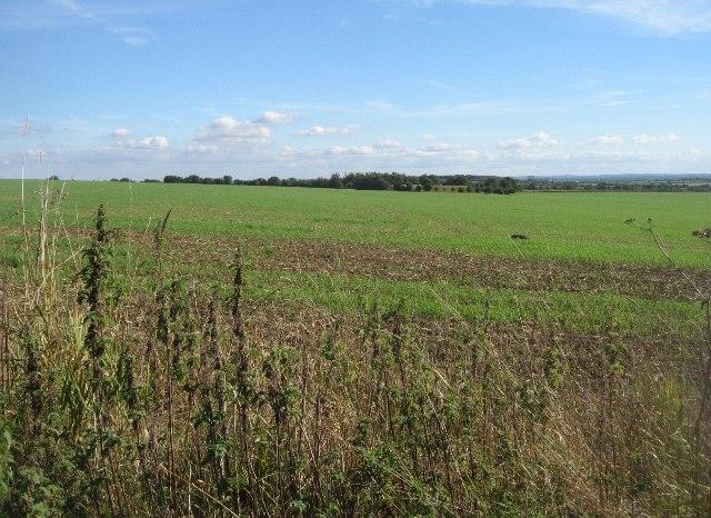 Big field (78.5 acres)