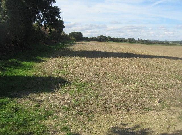 Field margins - Hampshire Downs