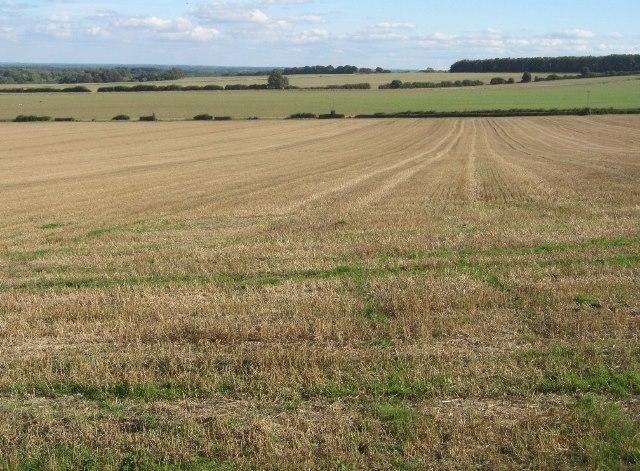 Farmland on the Hampshire Downs