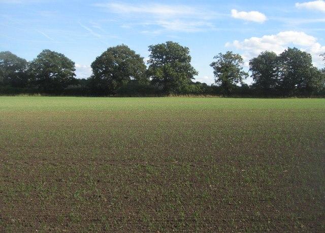 Farmland south of Ramsdell
