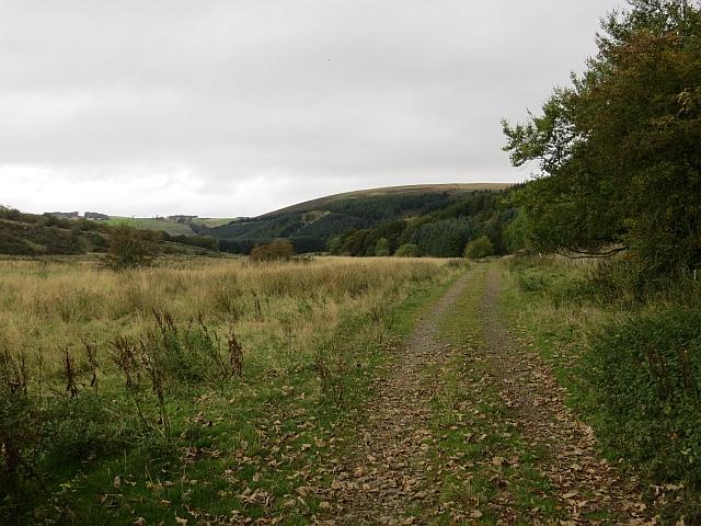 Road to Edgarhope Wood