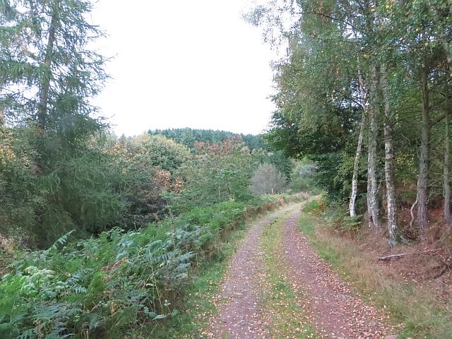 Edgarhope Wood