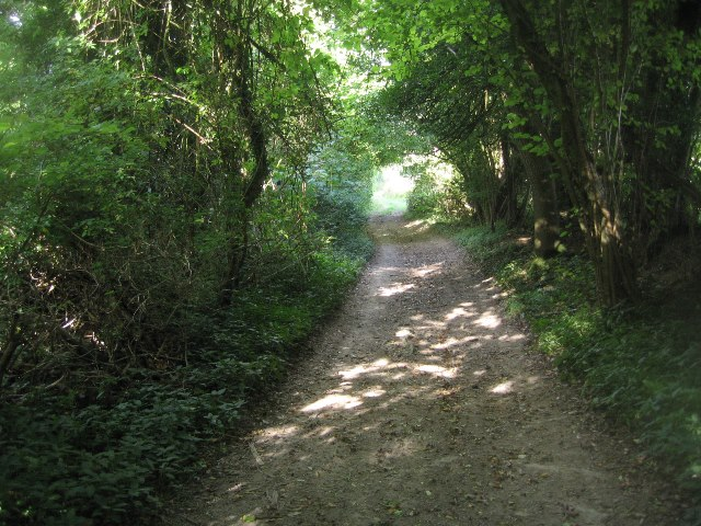 Byway crossing the Hampshire Downs