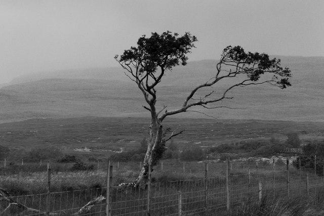 Wind blown tree in a barren landscape