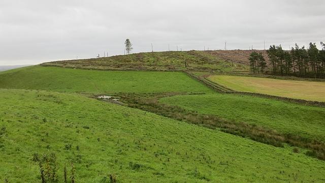 Bonnet Plantation