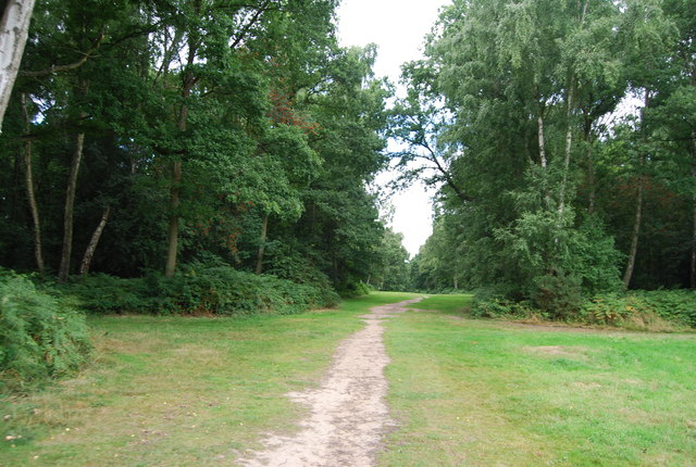 Crossing Chorleywood Common