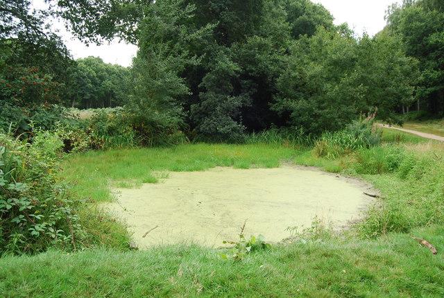 Pond, Chorleywood Common