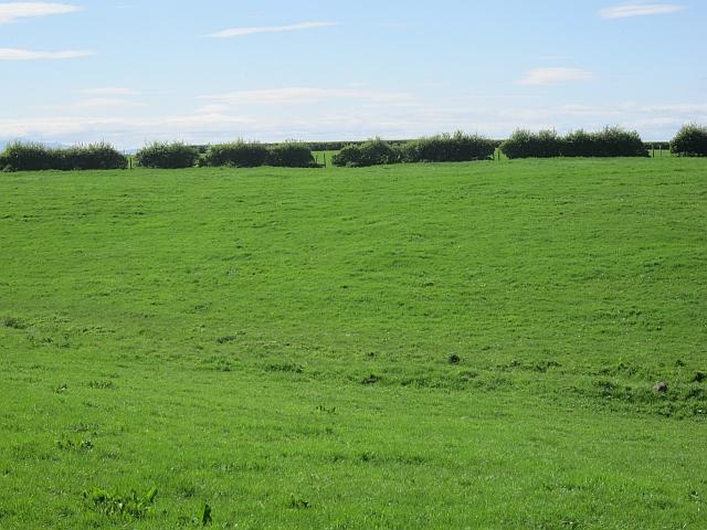 Field, Busbie Mains