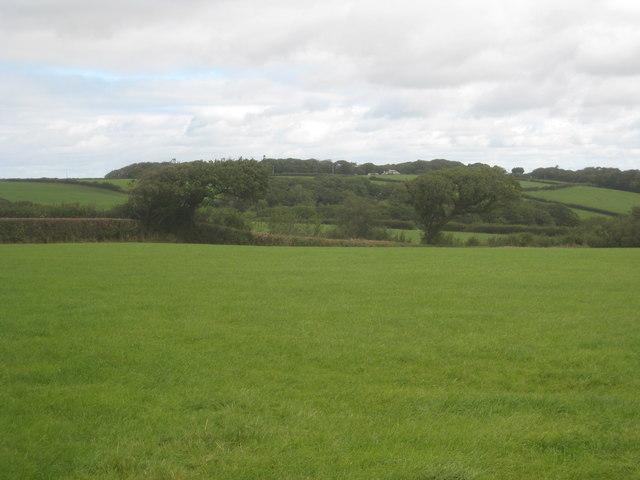Field at Dolsdon